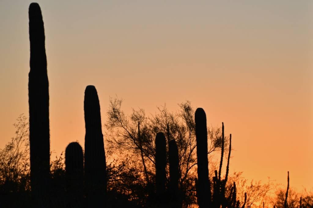 Scottsdale (237)