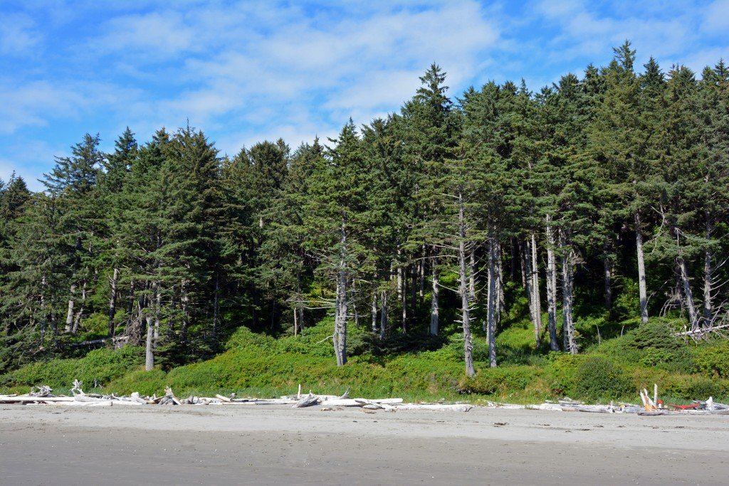Second Beach Olympic Peninsula Washington
