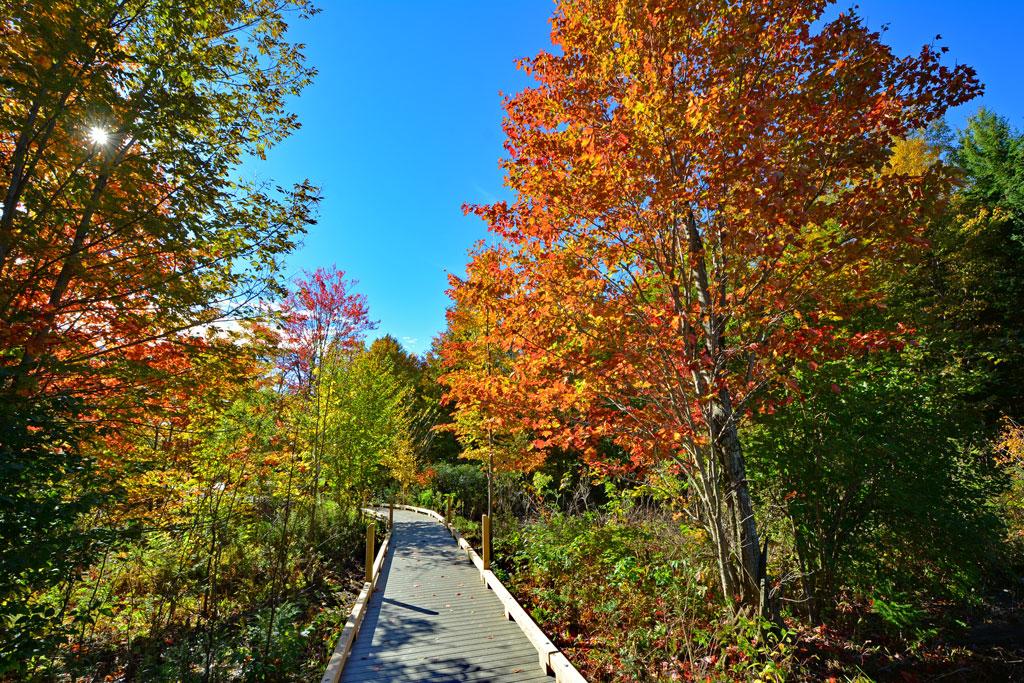 Stowe Foliage Hike