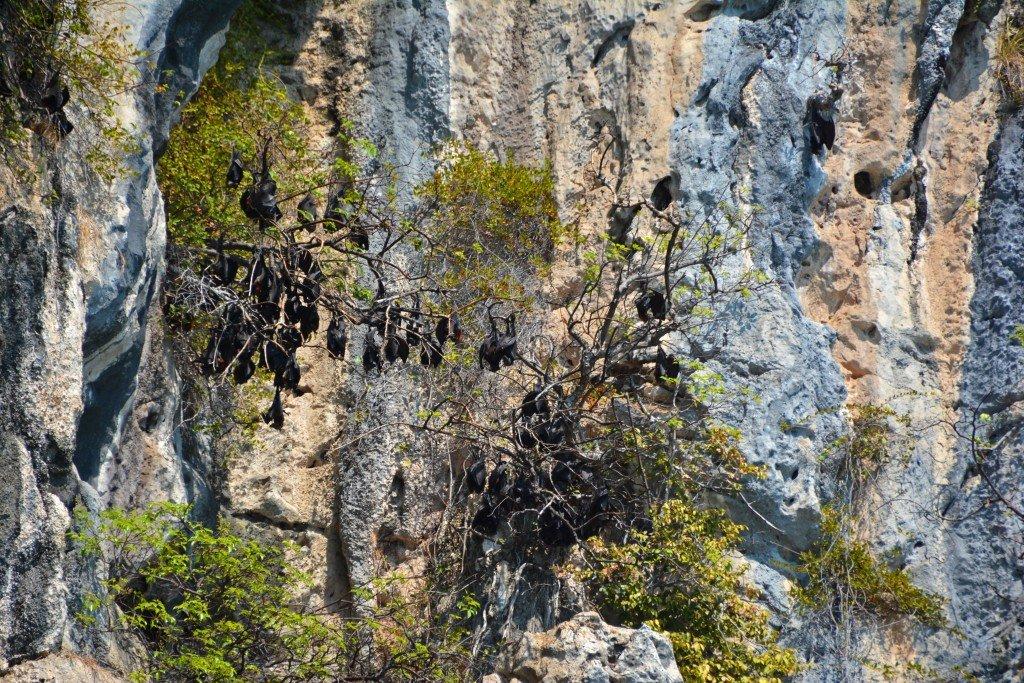 Thai Islands-Trang (91)