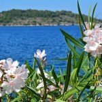 Don't Miss Vis Croatia- A Peaceful Island