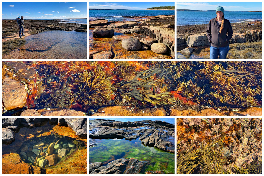 Maine Tide Pools